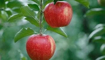 SEO Low Hanging Fruits